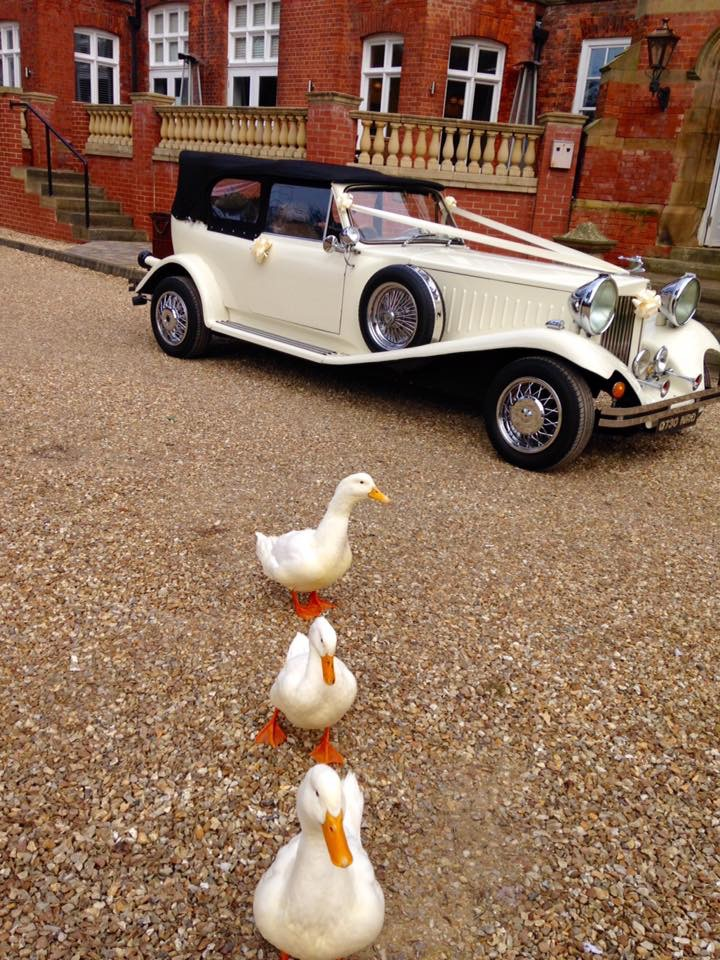 Select Limos Ivory Beauford Beau our classic 1930 style at Healing Manor